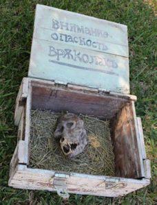 skull in box