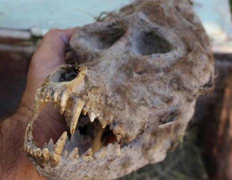 skull in hand1